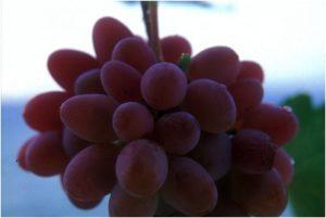 grapes-300x201