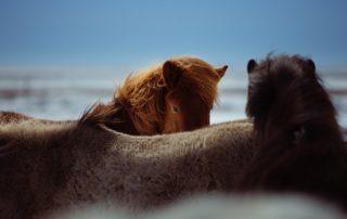horses-1031259_640-320x202