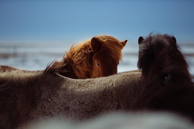 horses-1031259_640